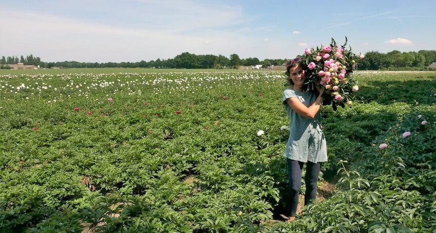 rutagardens-olandijos-bijunu-ukyje