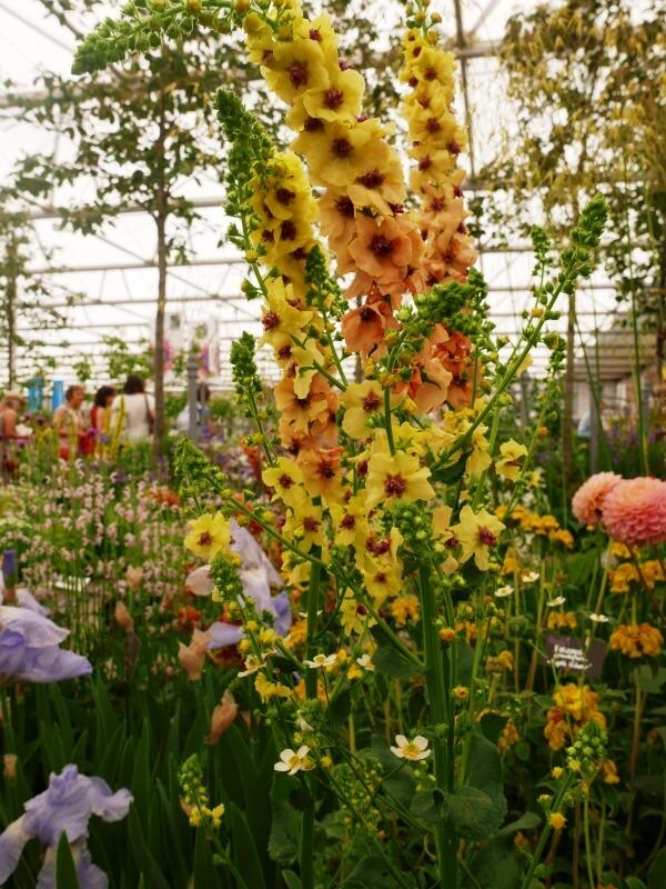 sodo-gėlės